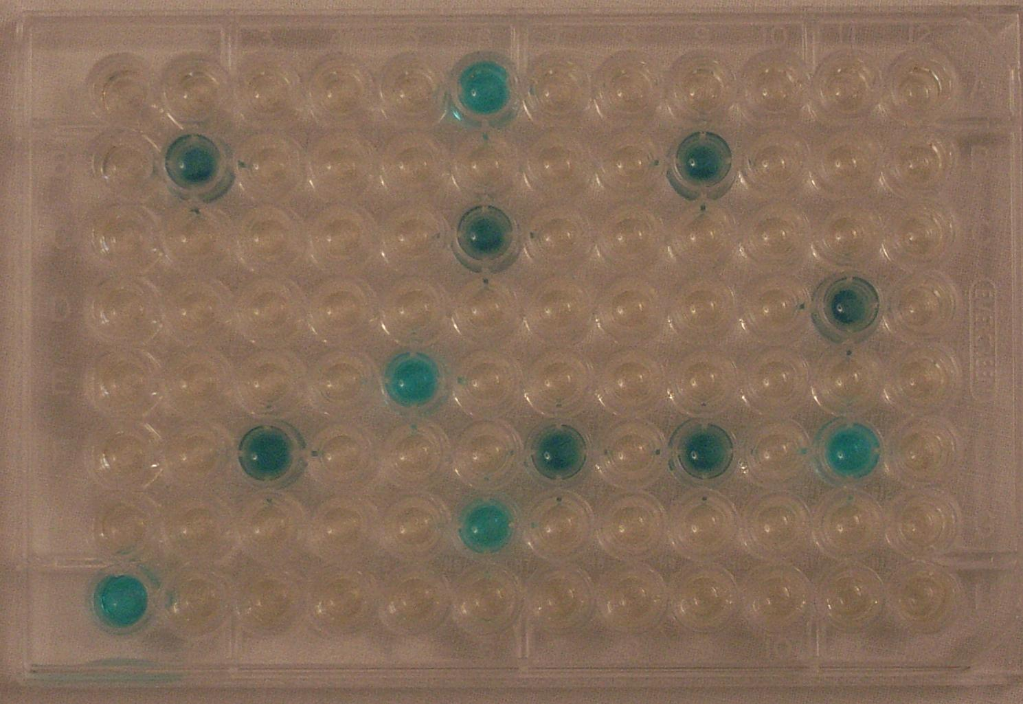 E.coli and bacterial Testing Coliplate for swiming