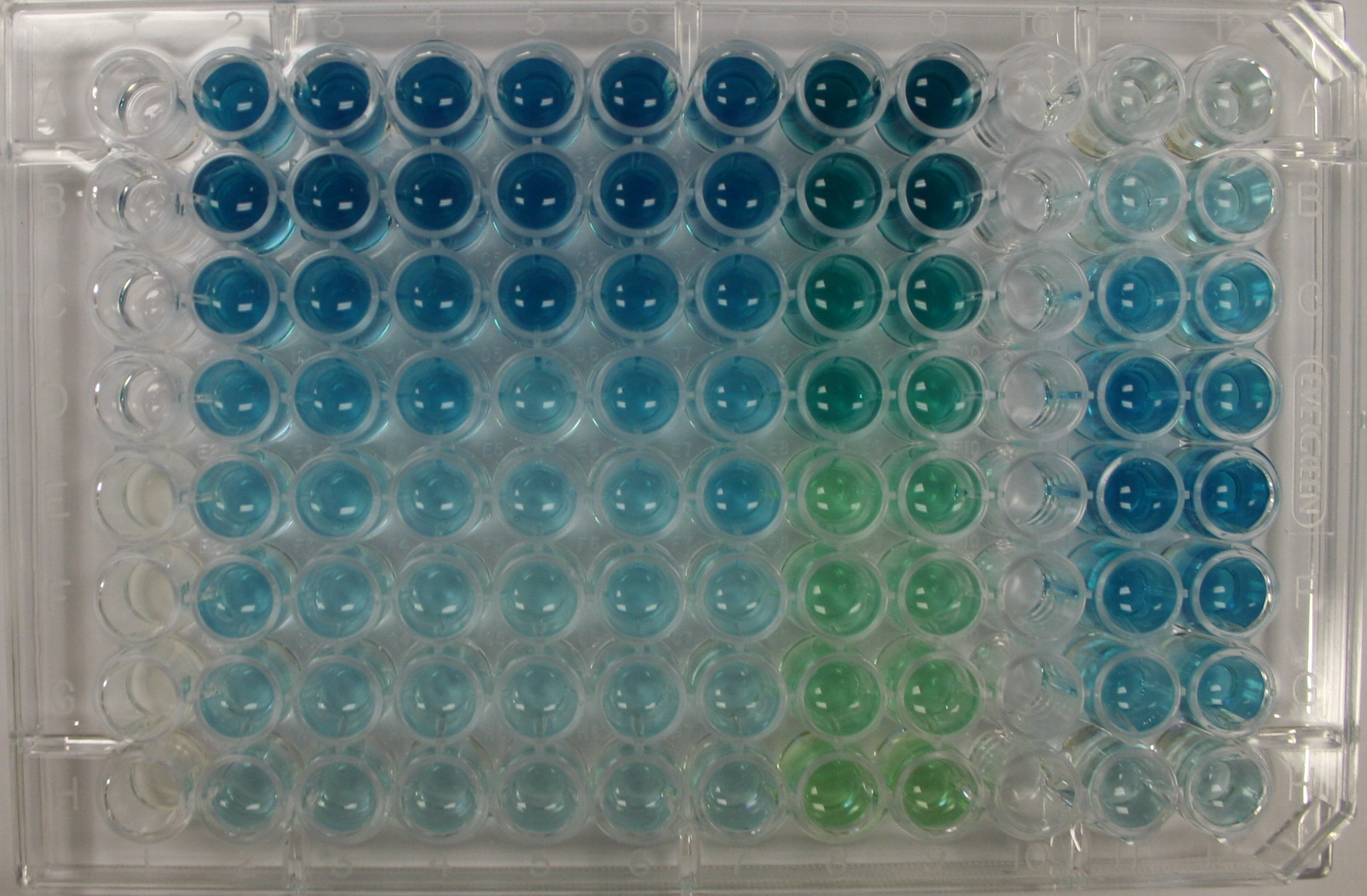 SOS-ChromoTest for genotoxicty